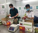 Trái cây tươi Việt Nam chuẩn bị tiếp tục xuất khẩu sang Mỹ