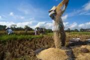 Khởi xướng phong trào giảm tiêu thụ gạo