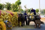 Hạ lưu sông Mekong: cần một phép tính thuận thiên