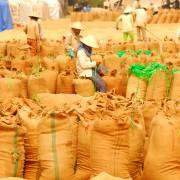 Giá gạo tiếp tục xu hướng tăng