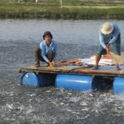 Thăm trại cá tra đạt tiêu chuẩn toàn cầu