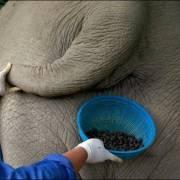 Cà phê voi giá 2 triệu đồng/kg ở Đắk Lắk