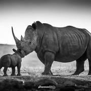 Ngà voi, sừng tê giác và lời khẩn cầu từ thiên nhiên