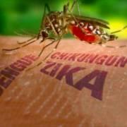 Bộ Y tế công bố kết quả xét nghiệm 83 trường hợp nghi nhiễm virus Zika