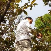 Trần Tiến Dũng: Chuyện hoa mai Sài Gòn