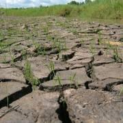 Hỗ trợ hơn 85 tỷ đồng cho 6 tỉnh bị hạn, mặn nặng