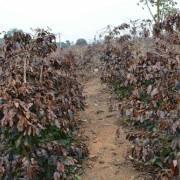 Những nông sản lao đao bởi hạn, mặn kỷ lục 100 năm