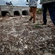 Người dân Bình Định gồng mình chống chọi với tình trạng thiếu nước