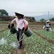 Biến đổi khí hậu làm mưa nhiều hơn và lương thực giảm 1/4