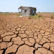 Tư duy, chính sách chuyển đổi đột phá để phát triển bền vững ĐBSCL