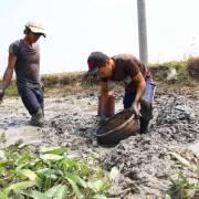 Hạn hán ở châu Á: Kẻ khóc ròng, người cười mỉm