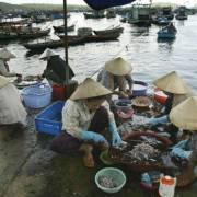 Bộ NN-PTNT: Cá chết chỉ có thể tiêu hủy, không thể dùng để làm mắm