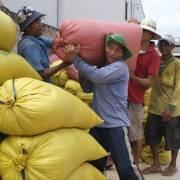Doanh nghiệp xuất khẩu đau đầu vì sốt giá gạo