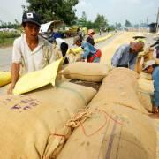 Xuất khẩu nông sản: Thiếu hàng là… dở rồi