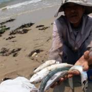 ADB: Tăng trưởng của Việt Nam đang gây thiệt hại về môi trường