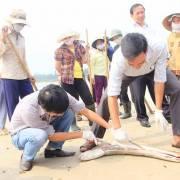 Cá chết kéo dài 500 km bờ biển: Dân hoang mang, chính quyền bối rối