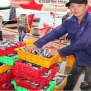 EU thông báo loại DN sử dụng chất cấm trong thủy sản