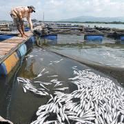 Ngư dân chính thức khởi kiện 14 doanh nghiệp gây ô nhiễm sông Chà Và