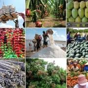 5 tháng đầu năm, xuất khẩu hơn 12 tỷ USD nông lâm thủy sản