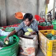 Đồng Nai: Nông dân lại điêu đứng vì xoài rớt giá