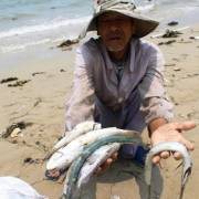 Ngày 30/6 mới công bố nguyên nhân cá chết