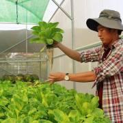 Chuyện chàng đạo diễn đi trồng rau tử tế