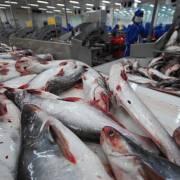 Kiểm tra 100% cá tra xuất khẩu sang Mỹ
