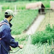 'Ma trận' thuốc bảo vệ thực vật ngáng đường nông sản sạch