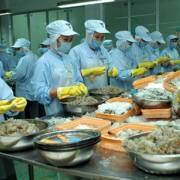 Thủy sản Việt Nam đối mặt nguy cơ mất thị trường Nhật và EU