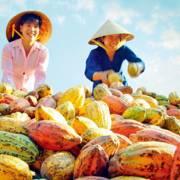 Xuất khẩu nông lâm thủy sản đạt hơn 15 tỷ USD trong 6 tháng