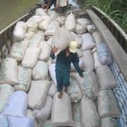 Việt Nam nên chấm dứt 'bưng bít thông tin về lúa gạo'