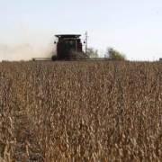 Brazil với tham vọng chiếm lĩnh 10% thị trường nông phẩm thế giới
