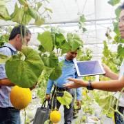 TPHCM bắt đầu hưởng quả ngọt từ nông nghiệp công nghệ cao
