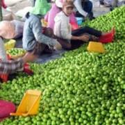 Nông sản Việt bao giờ hết bị động trước người Trung Quốc?