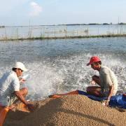 Phó Thủ tướng vào cuộc vụ 'kiểm định khống' thức ăn thủy sản