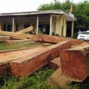 'Lâm tặc' ngang nhiên tàn phá rừng phòng hộ Vĩnh Linh