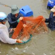 EU sẽ thanh tra toàn diện an toàn thực phẩm thủy sản nuôi của VN