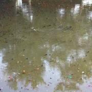 Huế: Cá chết trên sông An Cựu do mưa to gây ra hiện tượng yếm khí