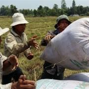 Thủ tướng chỉ đạo đẩy mạnh thu mua, tiêu thụ lúa gạo