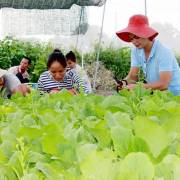Người Sài Gòn đổ xô thuê đất trồng rau sạch