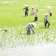 'Vựa lúa quốc gia' buộc phải gồng mình gánh điện than?