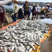 Bộ TN&MT vào cuộc vụ cá chết hàng loạt ở Nghi Sơn