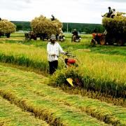 TS Đặng Kim Sơn: Đổi mới nông nghiệp bắt đầu từ chính sách đất đai