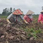 Thương lái Trung Quốc 'nuốt' người Việt vì 'thói quen dễ tính'