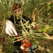 Vốn rót cho nông nghiệp hữu cơ ngày một nhiều