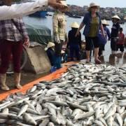 Thanh Hóa nghi ngờ 'tảo nở hoa' gây ra vụ cá chết hàng loạt