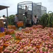 Trung Quốc dựng rào cản chặn nông sản Việt
