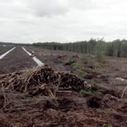 Tiền Giang: Dân ồ ạt phá rừng để trồng dứa và thanh long