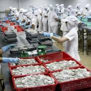 VASEP cảnh báo lừa đảo trong giao dịch xuất khẩu thủy sản