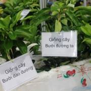 Nông sản Việt hầu như chưa có thương hiệu trên thị trường quốc tế